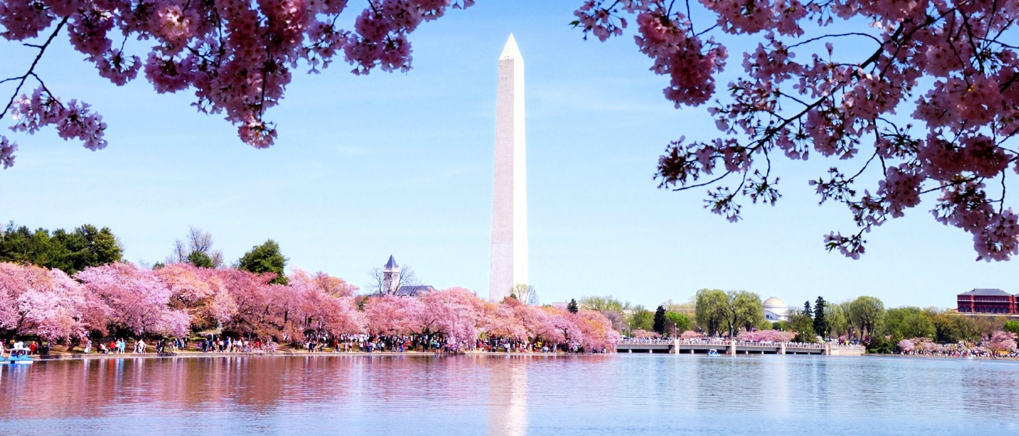 Sheraton Tysons Hotel - Cherry Blossoms and The Washington Monument